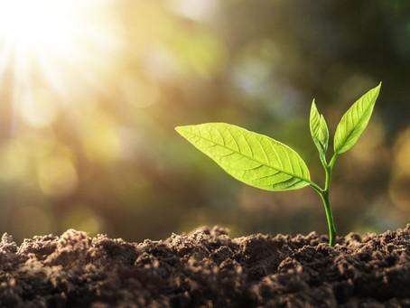 Fotossíntese, luz e vida: ofereça luz adequada para suas plantas e as terá sempre saudáveis.