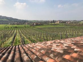 Como é feito o vinagre balsâmico tradicional de Modena?