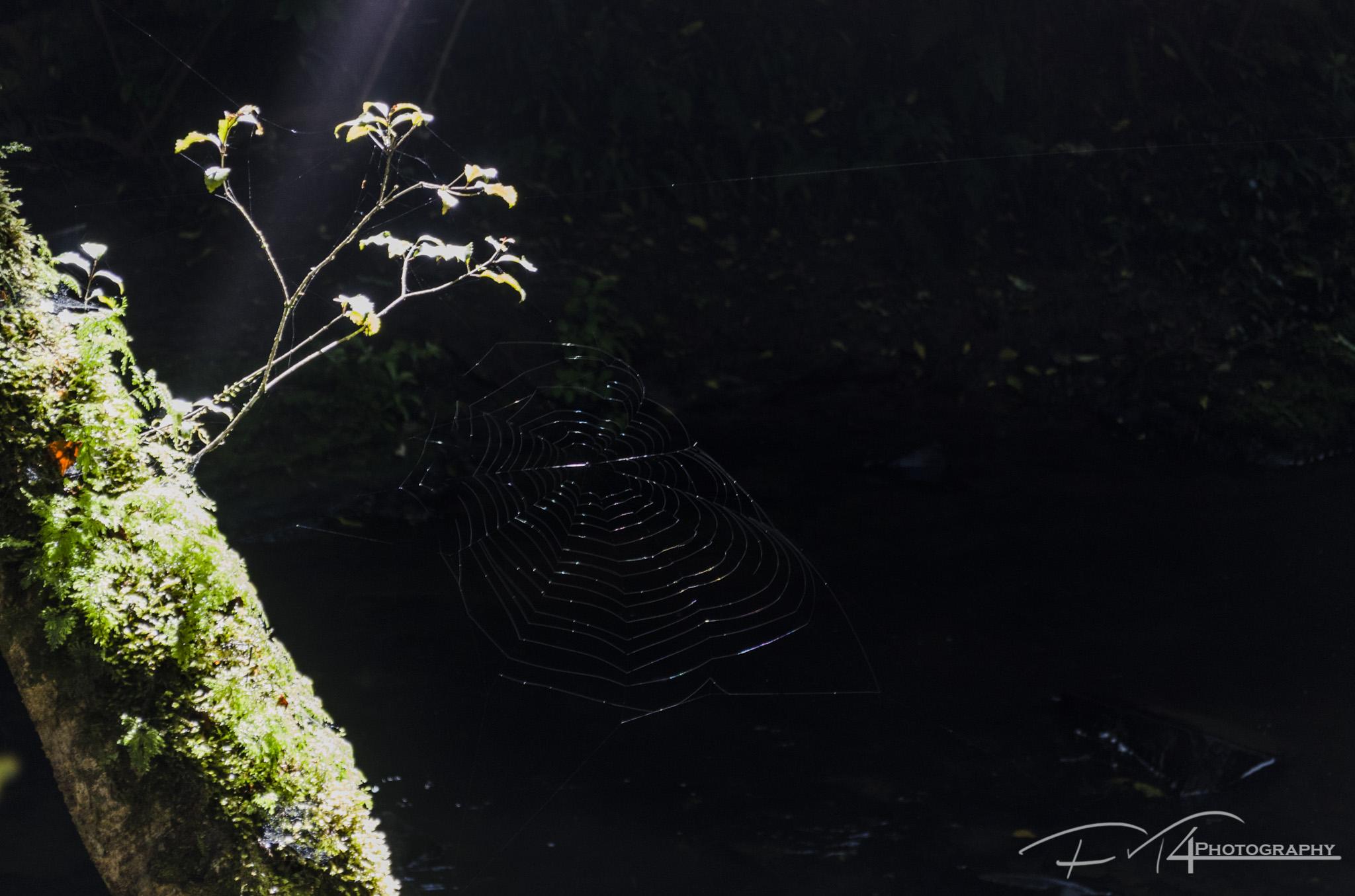 Spotlight (NZ)