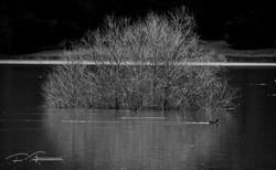 Flooded park birds having fun (CA)