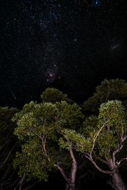 Shooting star the tree
