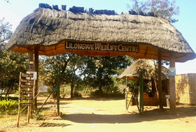 My visit at Lilongwe Wildlife Centre in Malawi