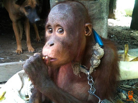 Novi's story: from being chained on the ground to life high in trees? You can make it happen!