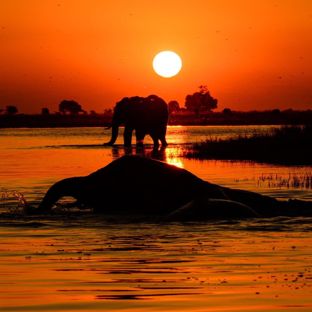 Canva - Elephant Sunset_edited_edited
