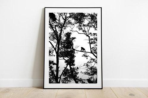 Black & White Bornean Orangutan Silouhette