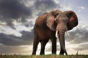 NEW CAMPAIGN LAUNCH: Save Elephants with Bees