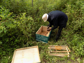 UPDATES FROM THE FIELD, Save Elephants with Bees