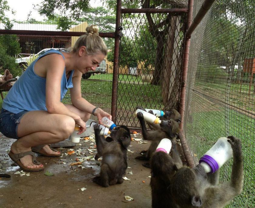Geraldine feeding orphaned Chacma baboons