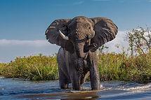 african-elephant-4999036_1920.jpg