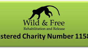 Wild & Free - Rehabilitation and Release is now a UK registered charity!