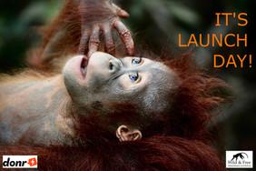 Orangutan campaign launch day!
