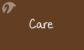 Spinner Care