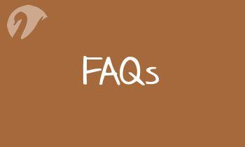 Spinner FAQs