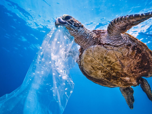Plastic-Free July Challenge #2: Sign the WWF Petition 🐢