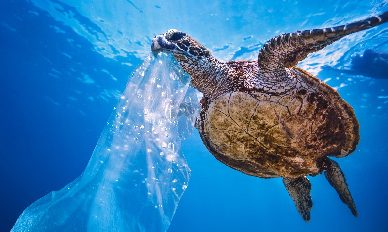 A sea turtle with ocean plastic pollution