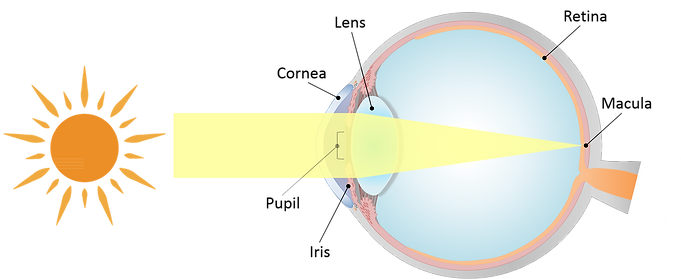 vison mechanism