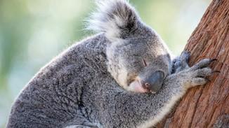 School Holidays at the Port Stephens Koala Sanctuary