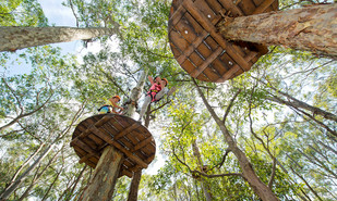 Win a Family Pass to TreeTops Adventure Park!