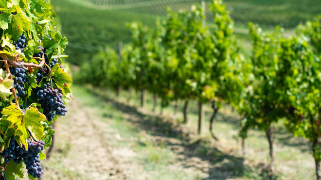 Explore Local, Live Local... Hunter Valley – A World of Wine & Food Secrets