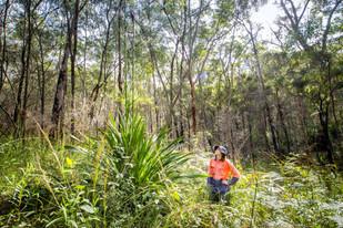 Lake Mac bushland bounces back after 2020 blaze