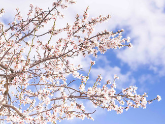 Whats On in Spring