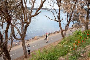 Investigations underway after enviro vandals poison waterfront trees