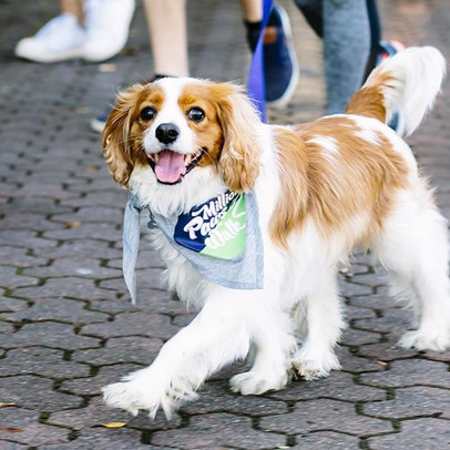 Join the millions of paws walking this May to fight animal cruelty!