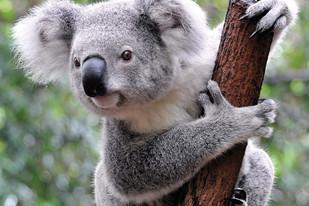 On Top of the World at Port Stephens Koala Sanctuary