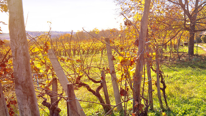 Love Local! And Discover Hunter Valley