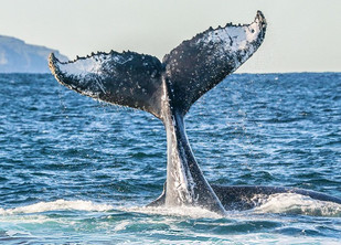 Whales Tales returns to Port Stephens this winter