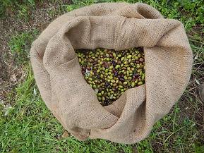 Huile d'olive de Grèce, Or vert, huile, olive, olives, huiles, oliviers, olivier, Elies, Messénie, Grèce, Kalamata, AOP, AOP Kalamata, alpha, beta, omega