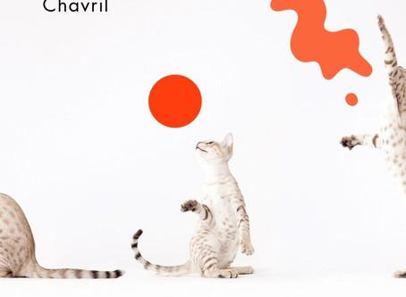 Le chat et l'homme: une histoire récente?