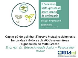 Capim-pé-de-galinha (Eleusine indica) resistentes a herbicidas inibidores da ACCase em áreas algodoeiras de Mato Grosso