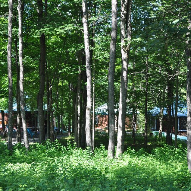 Yurt Village through trees