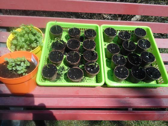 A start to the QLOC garden!