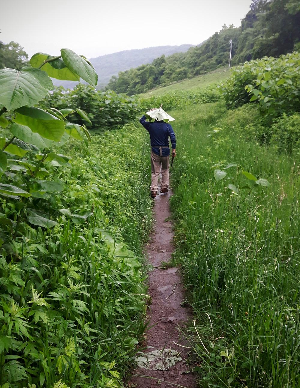Running down Mt. Moiwa in pouring rain