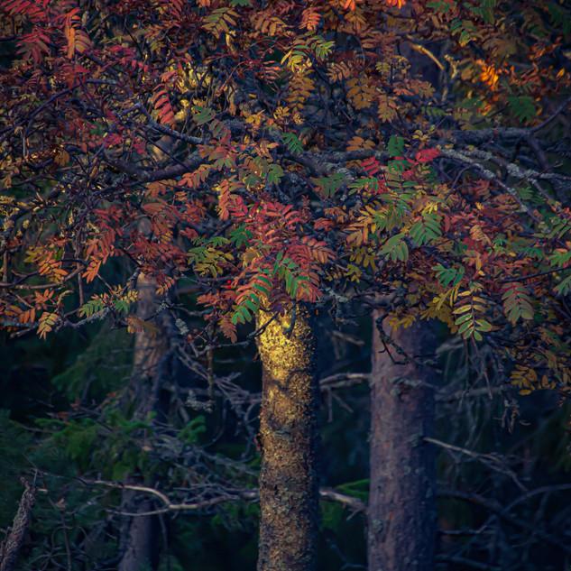 Puu.jpg