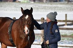 Pferdetraining.jpg