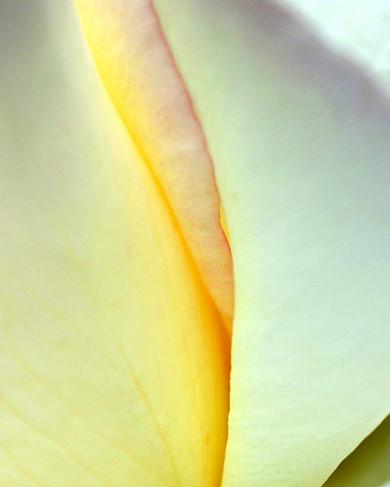 Velvet Folds
