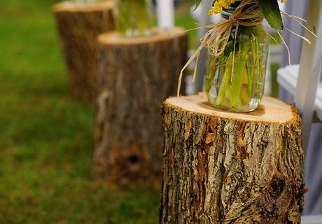 Timber stumps.jpg