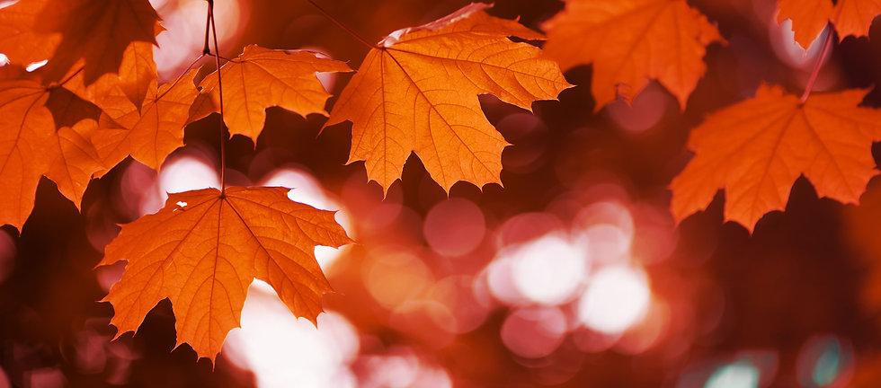 Leaves web.jpg