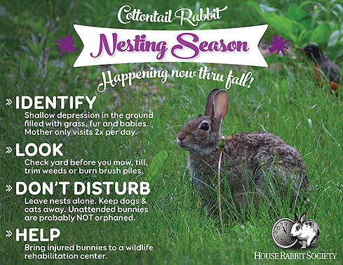 5_2016_Cottontail-Awareness_SMALL.jpg