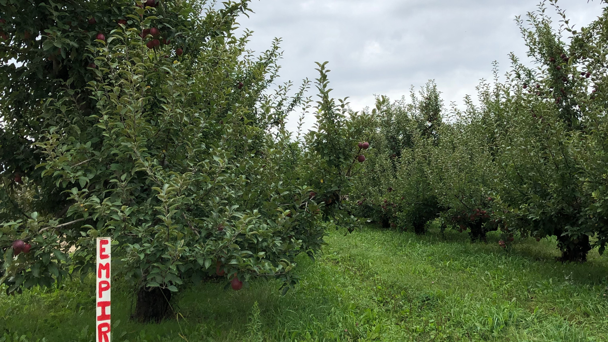 Pick your own apples!