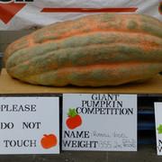 355.2 kilos of pumpkin