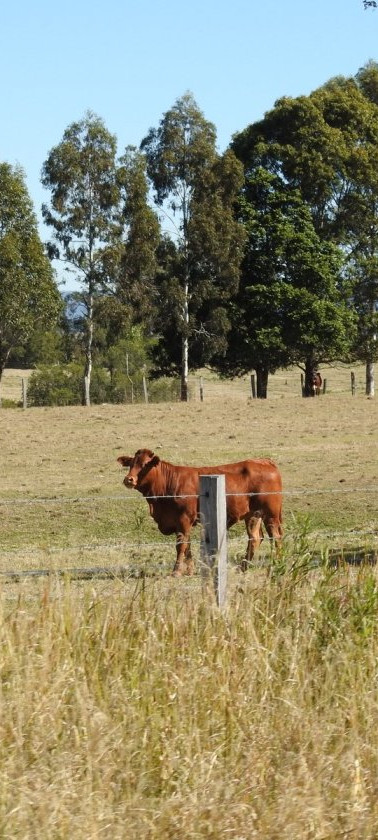 Brown's cows remain unimpressed