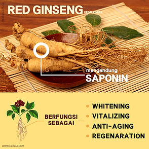 20191105-red-ginseng-snow-white-all2.jpg