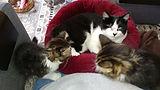 thumbnail_Helen and Friends.jpg