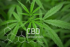 Cannabis Picture of  Formula CBD.jpg