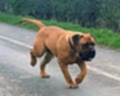 Taur running down lane at 18 months old.