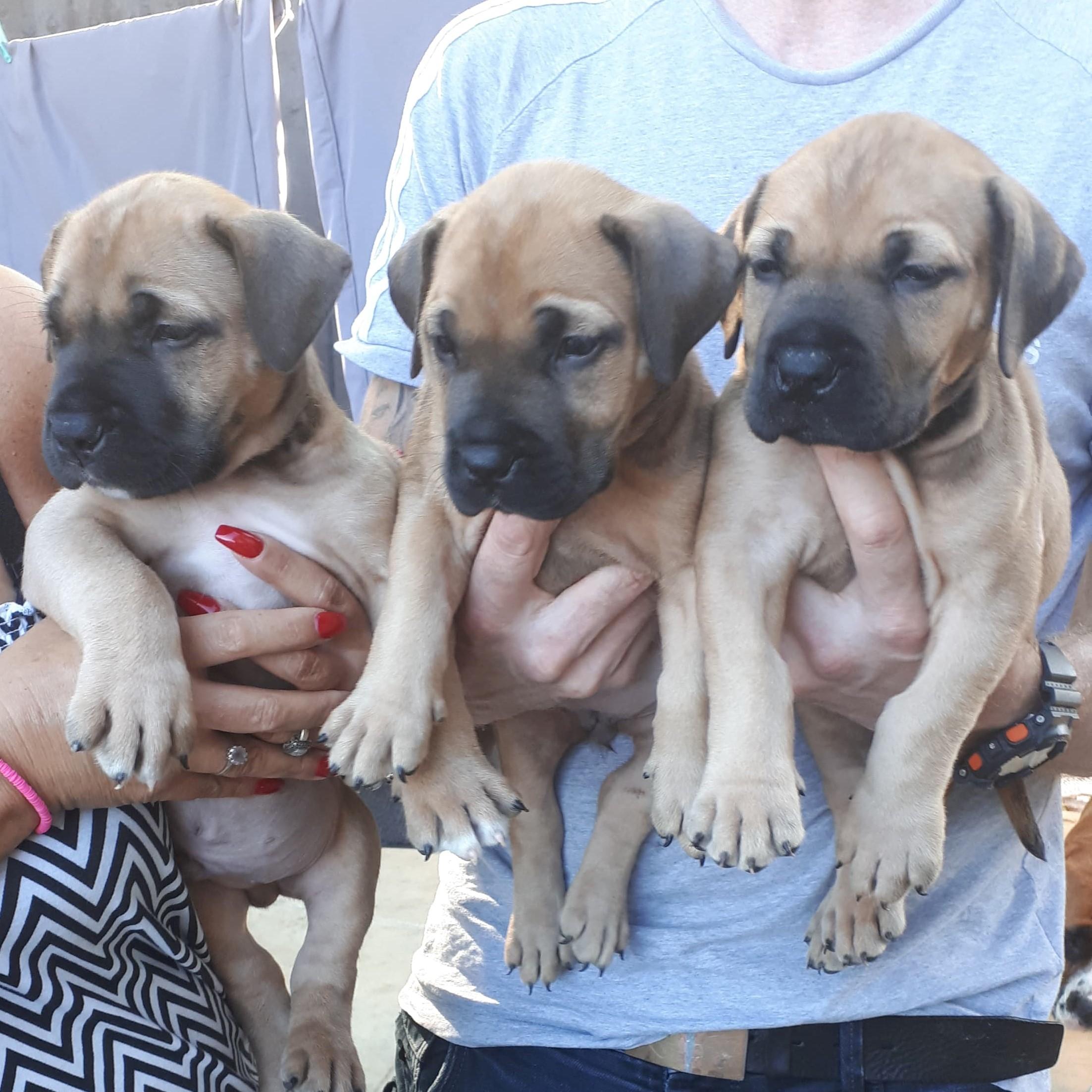 3 pups 6 weeks old